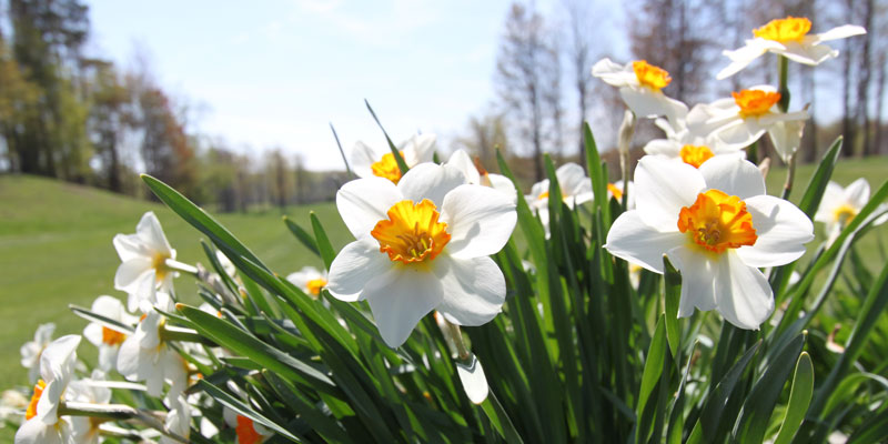Photo of flowers on tee box of Par 5 Hole 6 at Tamarack Golf Club in Oswego, NY.